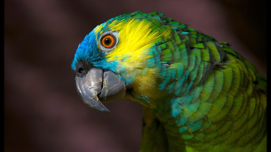 Tu veterinario de Loros Amazonas