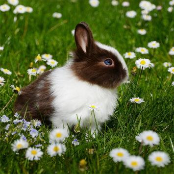 ¿Qué es la Enfermedad Hemorrágica Vírica del Conejo Tipo 2 (RHDV2)?