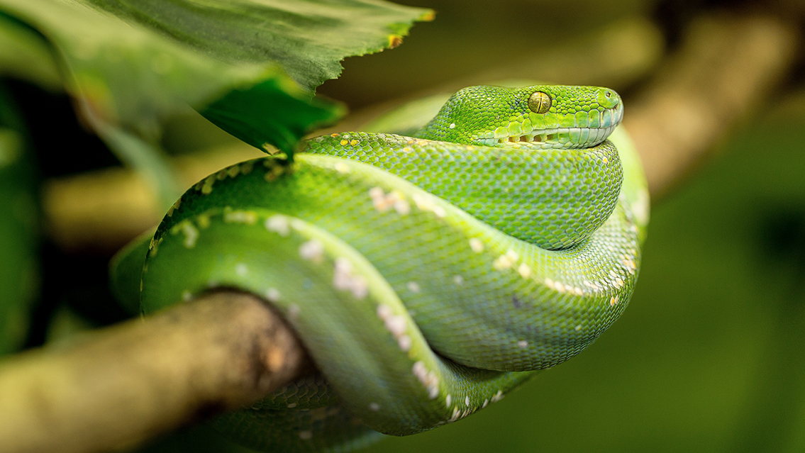 Tu veterinario de Serpientes
