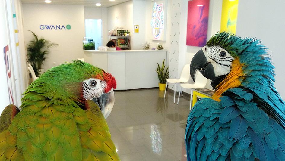 guacamayos-en-Residencia-animales-exoticos-madrid-Gwana-Vet