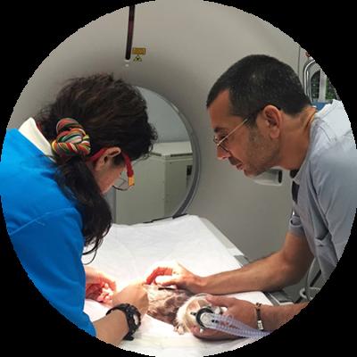 diagnostico-imagen-avanzado-tac-veterinario-exoticos-madrid-gwana-vet