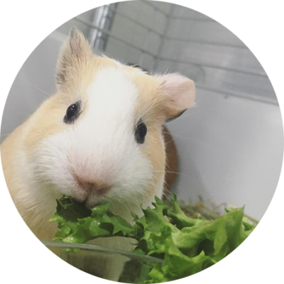 Residencia de animales exóticos para corrección de dietas