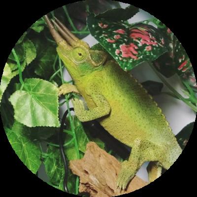 Residencia de reptiles con instalaciones adaptadas en Gwana Vet