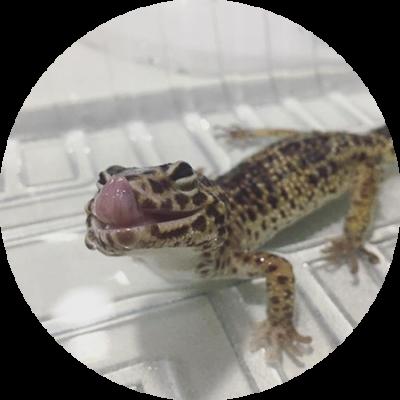 GWANA VET Residencia de reptiles y otros animales exóticos