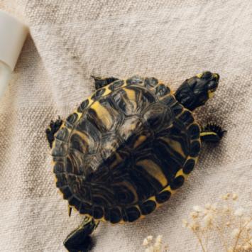 SOS ante el abandono de animales exóticos en verano